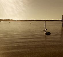 A Pelican at Dawn  by MardiGCalero