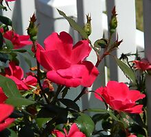 Red Roses by flowers2love