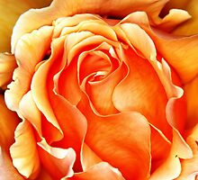 Orange Frilly by Kristina K