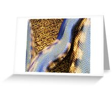 black headed python detail Greeting Card