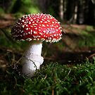 Magic Mushroom by Lindamell