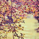 Autumn by BryanLee