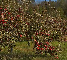 The Apple Orchard by cherylc1