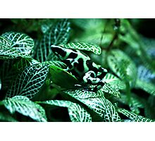 Green And Black Frog Photographic Print