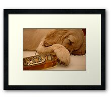 A Really Drunk Pup !! Framed Print