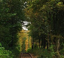 Forrest Tracks by Andrew Cryer