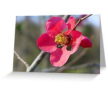 Primrose Laughter Greeting Card