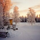 Mother's Yard - Old Homestead in Lapland Finland by Merja Waters