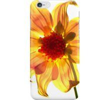 Goldie iPhone Case/Skin