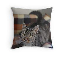 Babs the Cat Throw Pillow