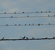 Bird on A Wire by Colin Morley