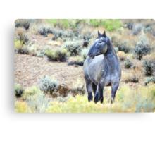 The Watchful Eye - Wild Blue Roan Stallion Canvas Print