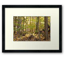 Golden Glade Framed Print