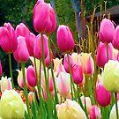 Lindos Tulipanes by Esperanza Gallego