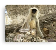 Monkey Model Canvas Print