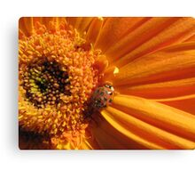 little old lady bug Canvas Print