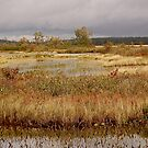 Tupper Lake, NY by Jeannette Sheehy