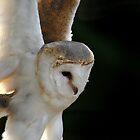 Barn Owl Swoop by Speedster502