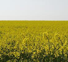 Golden Field by Adrian Wale