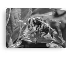 Big Wasp Canvas Print