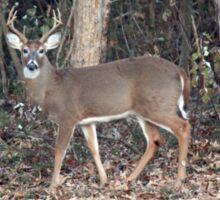 Deer Dad Sticker