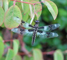 Dragonfly Resting on Katsura Tree by Beth Johnston
