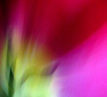 Tulip by Kitsmumma