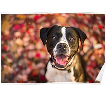 Nixie Lix - Happy in Ruby Red Poster