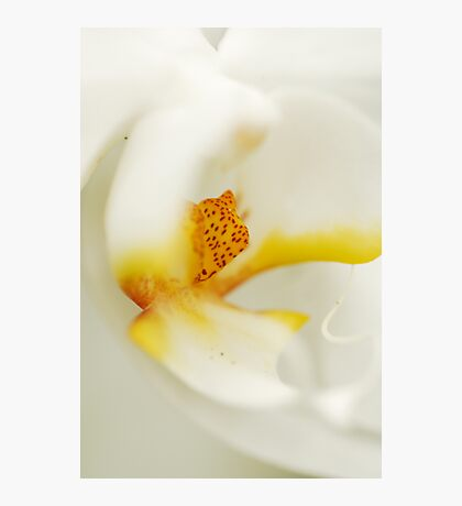 White Macro Photographic Print