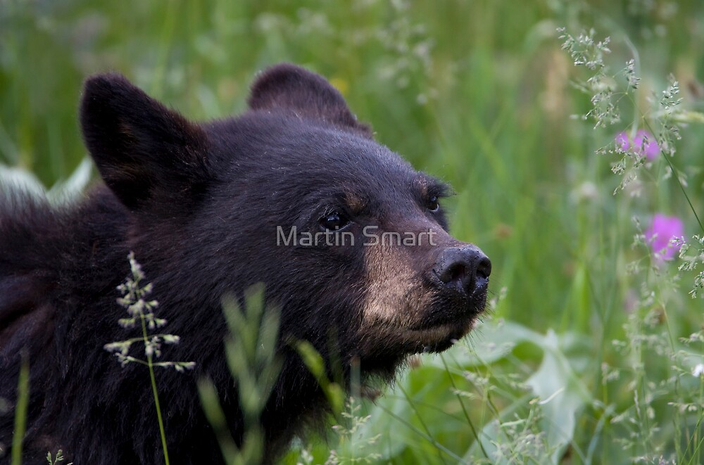 Cub Scout by Martin Smart