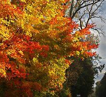 Country Tree by Adam Bykowski