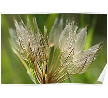 Luminescent  Dandelion  Poster