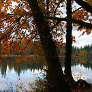 Lakeside Autumn Beauty by Tori Snow