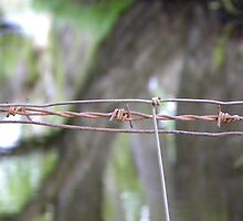 Barbed by Anna Rogers