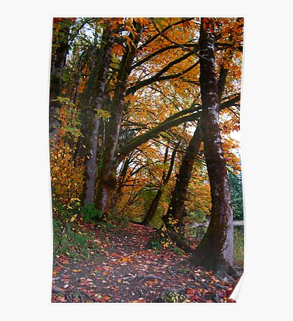 Autumn Trees by the Lake Poster
