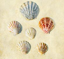 Shell study by paulgrand
