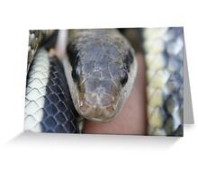 Sssssssssss! Greeting Card
