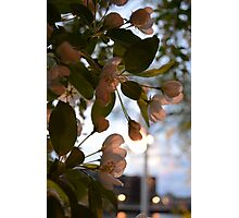 Everything's still blooming in Wisconsin Photographic Print