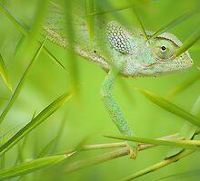 Chameleon by Alex  Bramwell