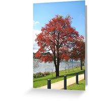 Illawarra Flame Greeting Card
