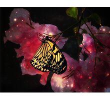 Fairy Dust Flowers Photographic Print