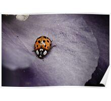 ladybug on purple flower Poster