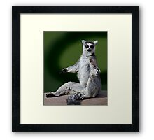 Yoga for Lemurs Framed Print