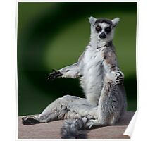 Yoga for Lemurs Poster