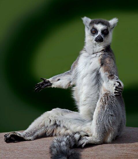 Yoga for Lemurs by Krys Bailey