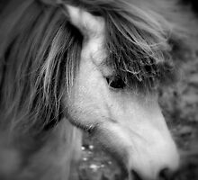 """Manadis"" - Icelandic Horse by Mitch ( Michelle) McFarlane"