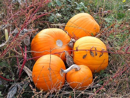 Bumkins Pumkin Patch by Pamela Jayne Smith
