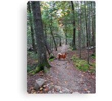 'On the Trail to Jordan Pond' Canvas Print