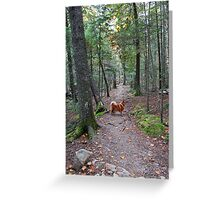 'On the Trail to Jordan Pond' Greeting Card
