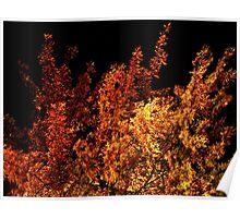 Flaming Tree Poster